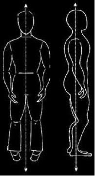 Chi Anatomy