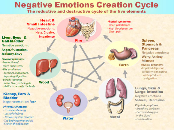 Figure 2. The negative emotions are the body's garbage.